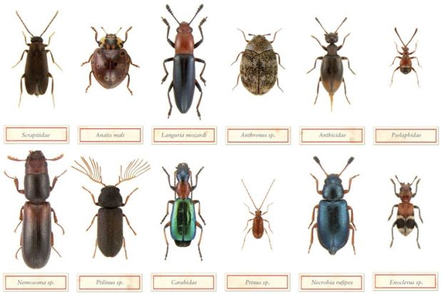 Using Toys to Study Common Insects (and Their Relatives ...