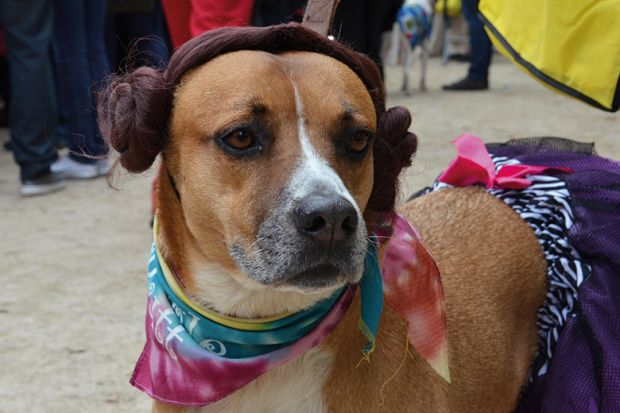 A dog with scarves around its neck