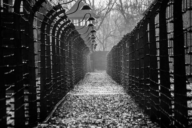 auschwitz-fences