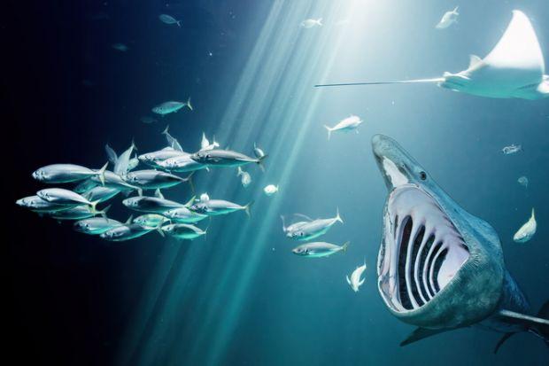 Big fish chases small fish