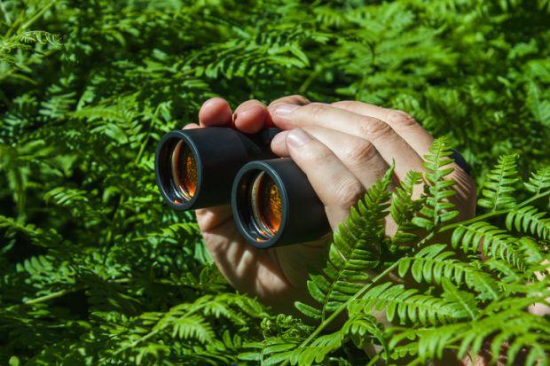 Binoculars in bushes