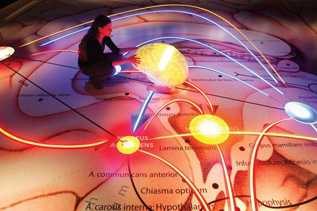person touches illuminated brain model