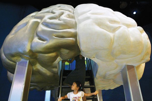 A Chinese girl explores a model of the brain at the Shanghai Science and Technology Museum