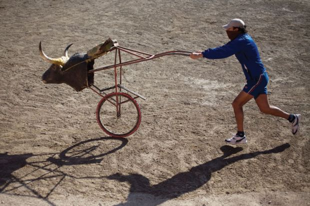Bullfighter pushing stuffed bull's head on bicycle wheel