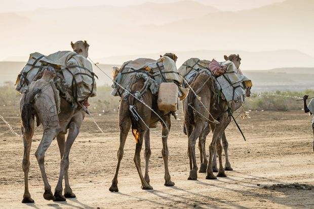 A train of camels