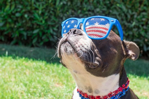Dog in US flag sunglasses