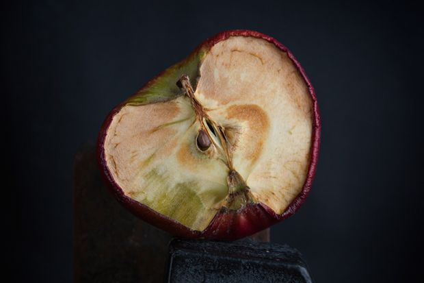 Dry old apple cut in half