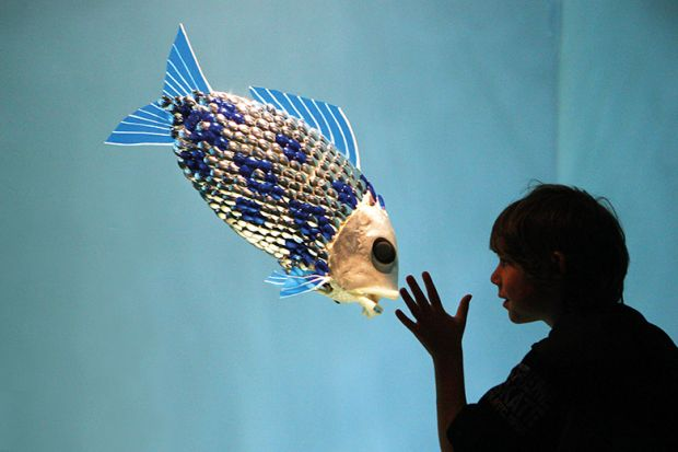 Child looks at fish