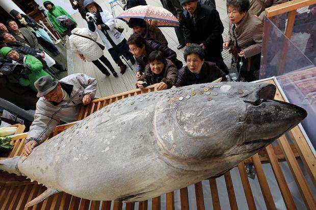 People place coins on bluefin tuna at Nishinomiya Shrine, Japan