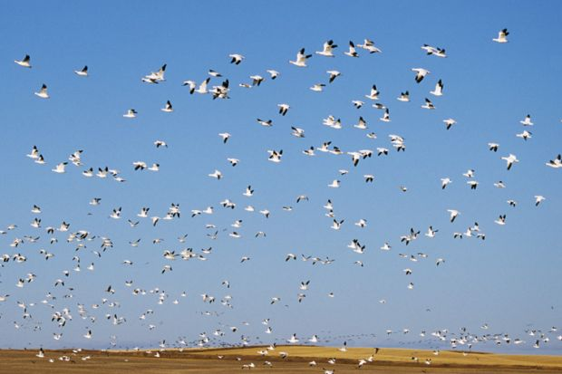 Flock of seagulls flying against blue sky