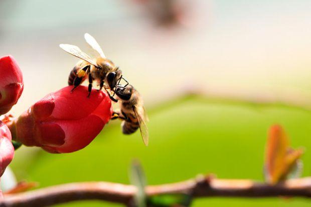 Gay bees