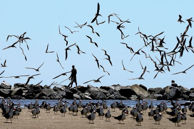 Many birds taking flight on a beach