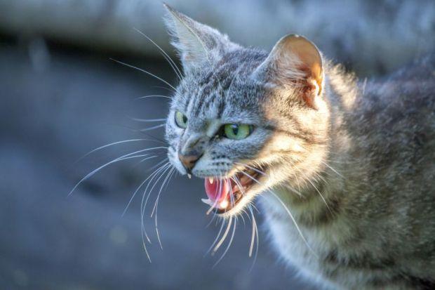 Hostile cat