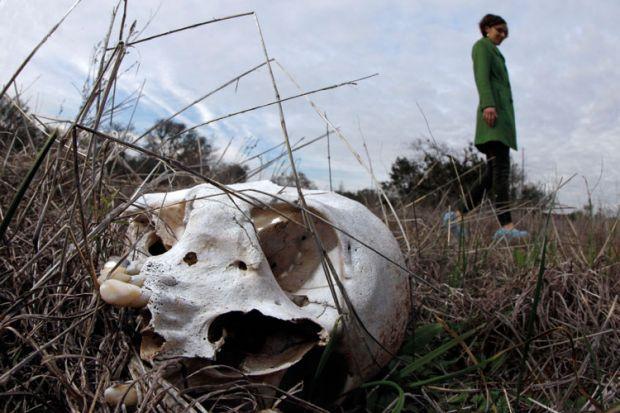 Human skull in grass