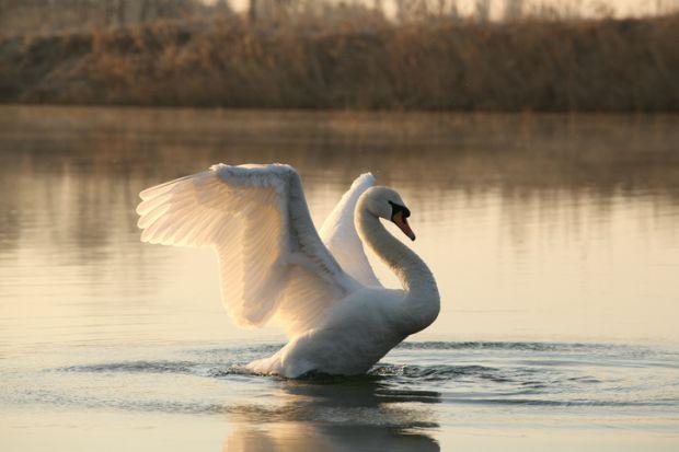 Spreading wings