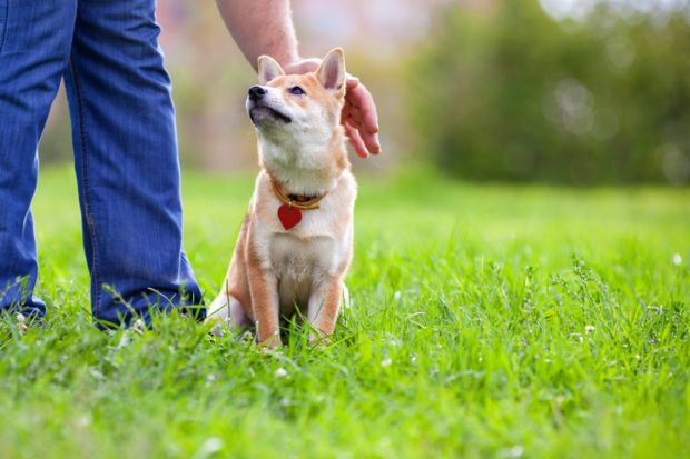 dog, petting, patronising, loyalty