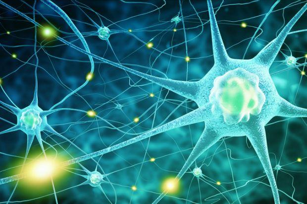 Pursuing a PhD in neuroscience