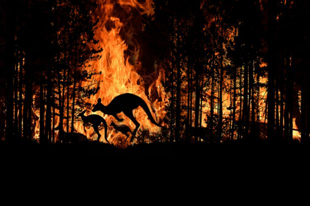 bushfire wildfire fire crisis disaster kangaroo