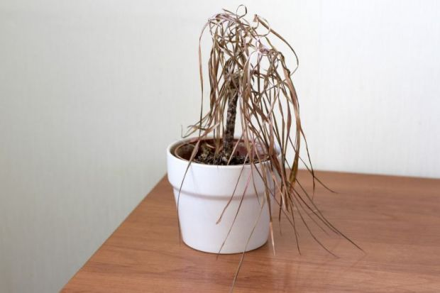 dying plant poor financial health