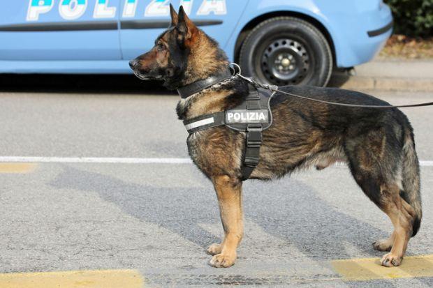 police dog watchdog polizia
