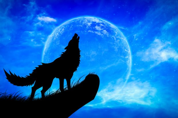 werewolf conference billed as first for uk academy times higher