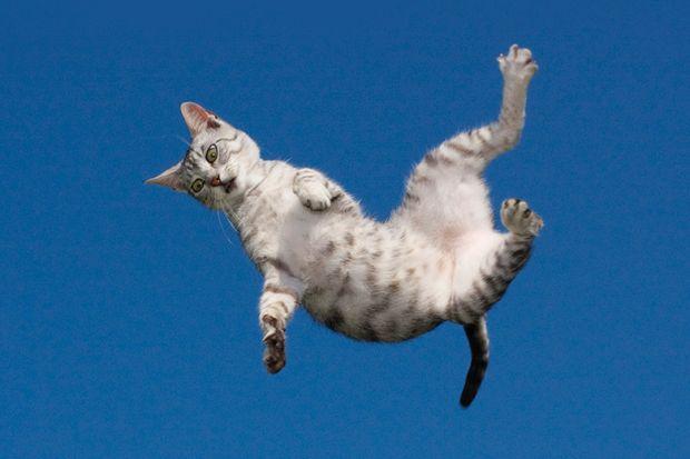 cat falling