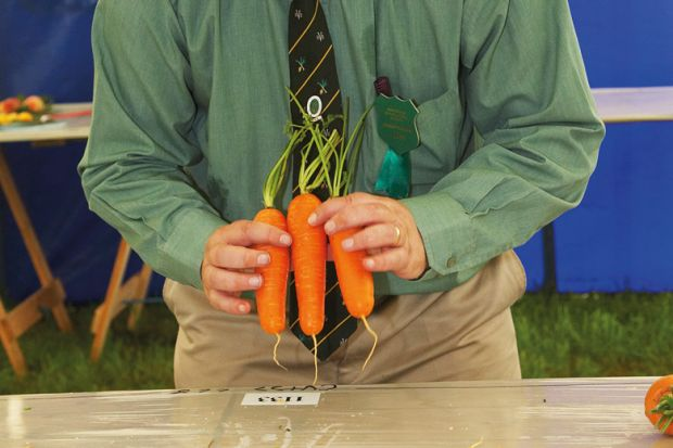Man grading/judging carrots, Muker Agricultural Show, England