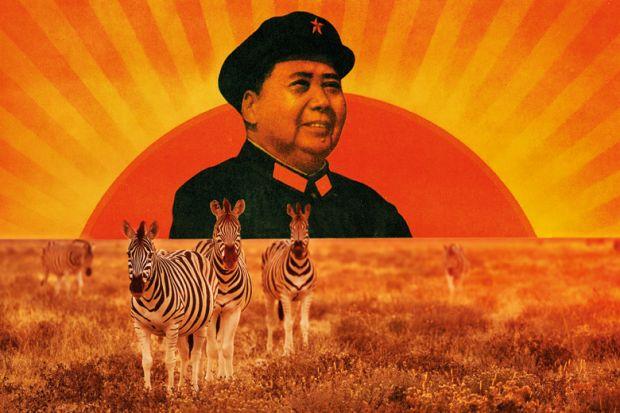 Mao Zedong portrait/Herd of zebra grazing on African plain
