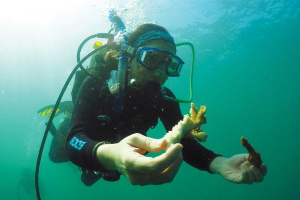 Hawaiian coral evolution sparks worldwide debate | Times Higher ...