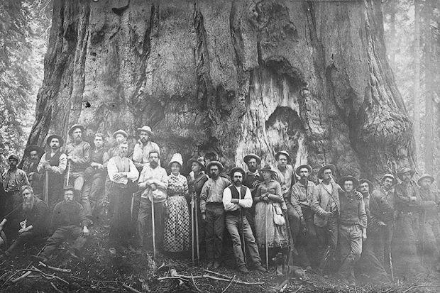 Sequoia called 'Karl Marx'