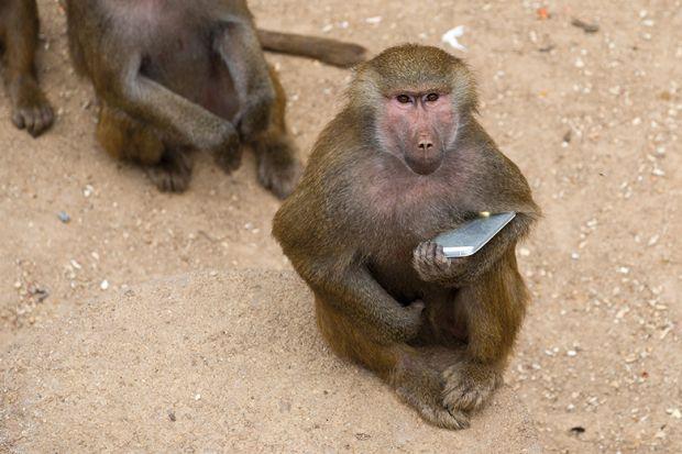 monkey holding phone