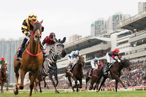 zebra in horse race