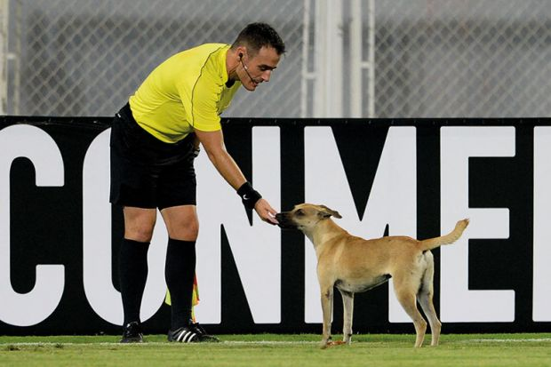 referee and dog