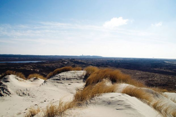 Sand dunes, Terschelling, Friesland, Netherlands