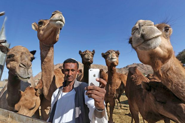 Selfie with camels