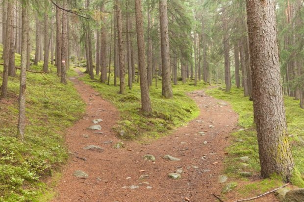 Single alpine path splits in two different directions