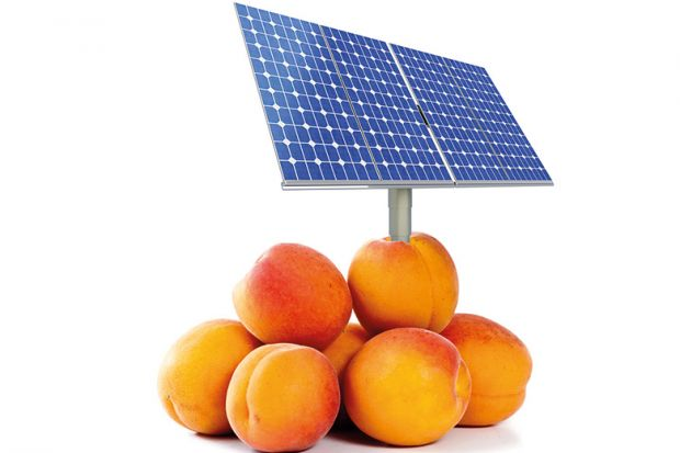 Solar panel in peaches