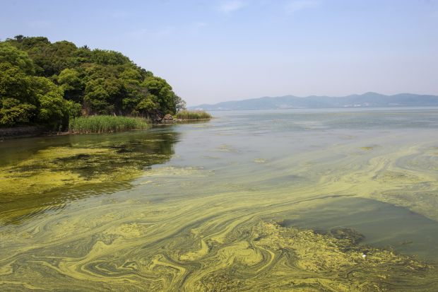 Pollution in Tai Lake near Shanghai