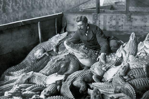 Man with alligators