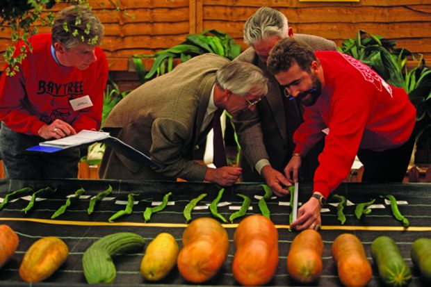 Two judges wearing identical tweed jackets are assisted by two other officials, also wearing the same red sweatshirts, are measuring oversized runner beans during the vegetable Olympics