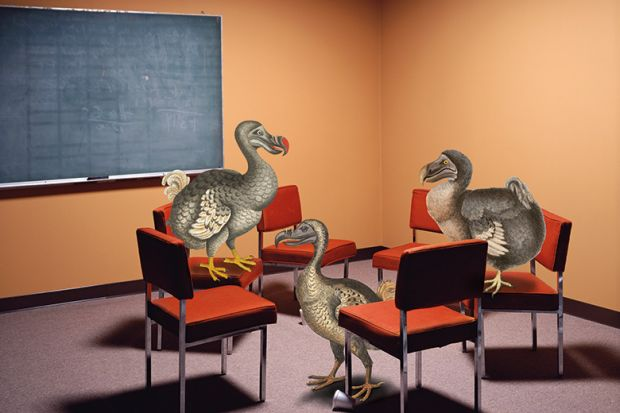 An illustration of three dodos in a classroom