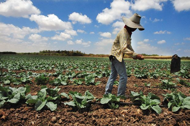 Migrant farm workers in Israel