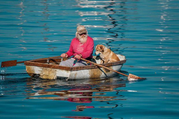 An elderly man and his dog paddling a row boat in Monterey Bay, California.