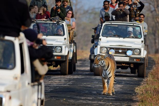 Tourists looking at tiger