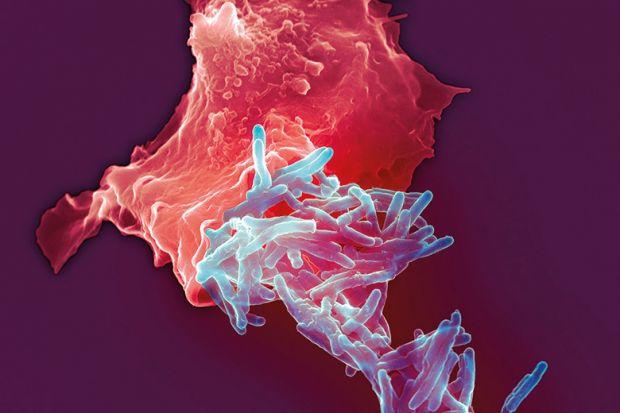 Tuberculosis bacilli