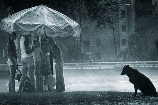 People grouped under an umbrella while a dog sits in the rain illustrating the status of doctoral researchers