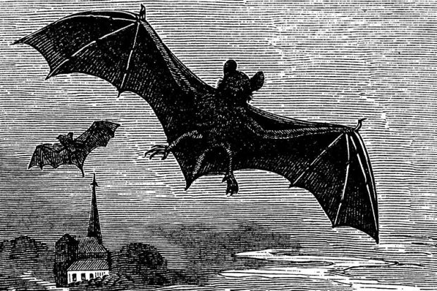Victorian engraving of bats