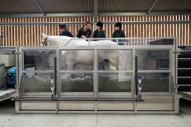 horse, water treadmill,