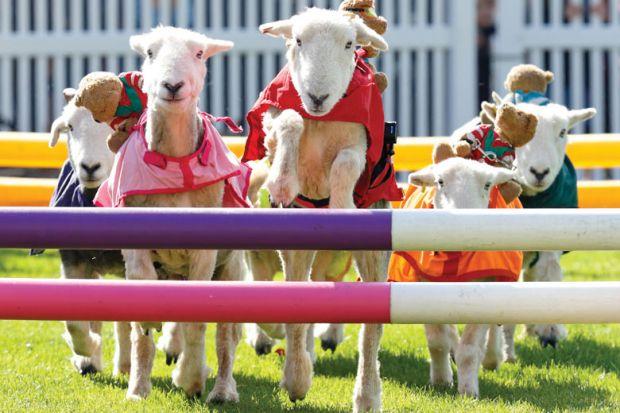 sheep jumping over hurdles as metaphor for US universities push for fewer hurdles on gene editing livestock