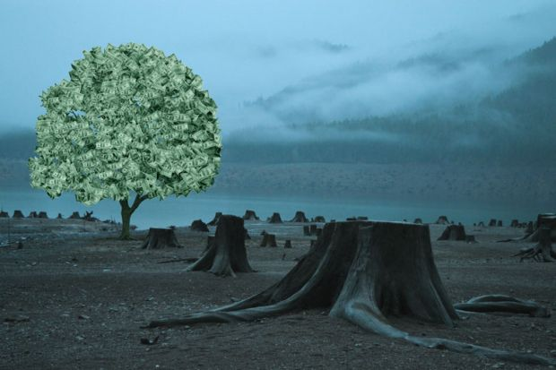 Tree filled with money with other trees cut down.